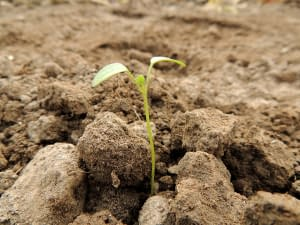 new plant - The psychology of the Parable of the Sower