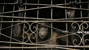NY court asked to determine if chimp is legally a person