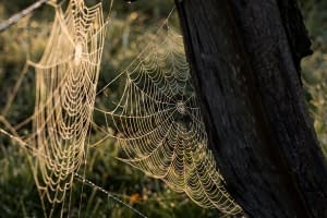 What a tangled web we weave when we try to deceive God